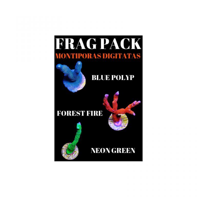 Frag Pack - Montipora Digitata